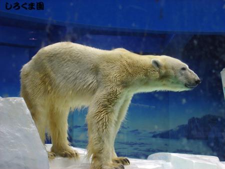 Arktick_01