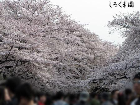 Ueno_08