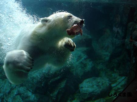 Polar_01