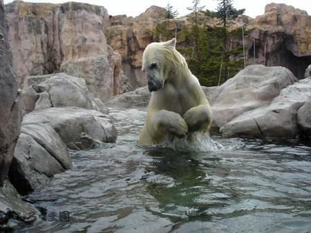 Polar_02
