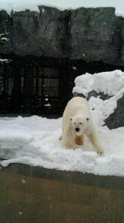 雪は素晴らしい!